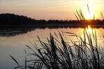 La Dombes est une région reconnue pour ses produits issus de ses étangs.