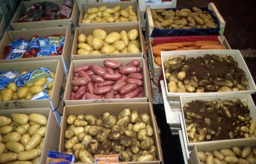 Cnrs sagascience pourquoi tant de vari t s de pommes de terre - Variete de pomme de terre ancienne ...