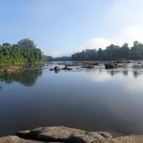 Seuls 14 % des cours d'eau du globe abritent une biodiversité en poissons peu impactée par les activités humaines